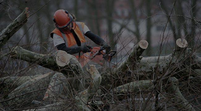 Gulf Shores Tree Service